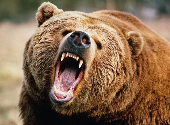 Фотоловушка на«Таганае» записала, как ееест дикий медведь