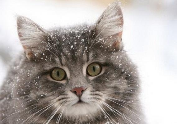 Фото замёрзших котов